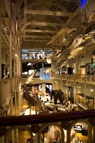 National Museum Scotland Edinburgh: la parte dedicata al mondo animale