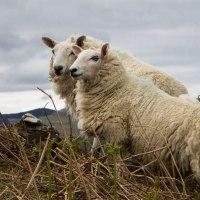 Fauna scozzese: quali animali si avvistano in Scozia?
