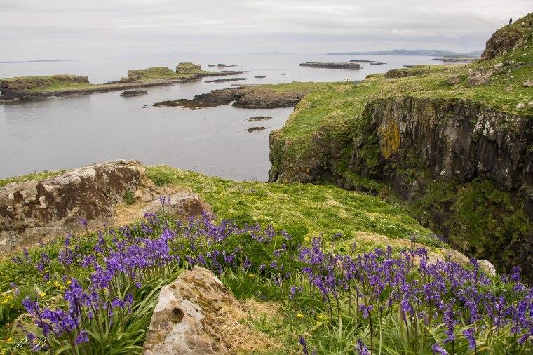 treshnish isles lunga