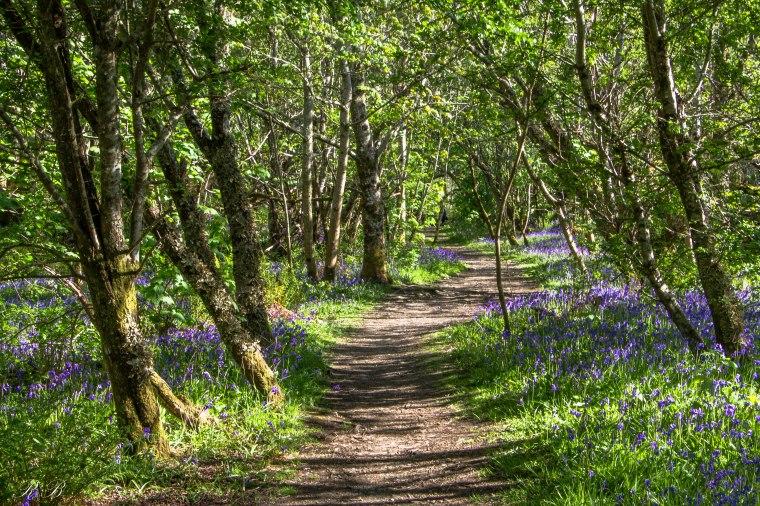 walking wood flowers