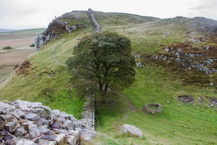 sycamore_gap_hadrian's_wall_BeatriceRoat