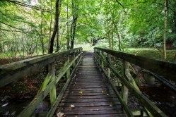 Il sentiero che conduce alla Birnam Oak