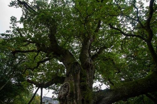 Dunkeld-Birnam-Scozia-Nelcuoredellascozia-BeatriceRoat