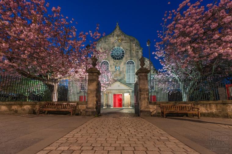 cherry-blossom-at-canongete-kirk