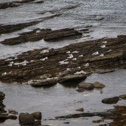 I gabbiani riposano sugli scogli