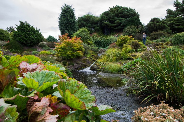 Edinburgh_Botanic_Garden_BeatriceRoat