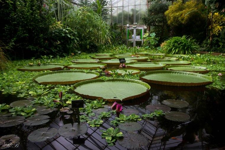 BotanicGardenEdinburgh_BeatriceRoat