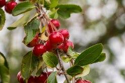 Frutti autunnali