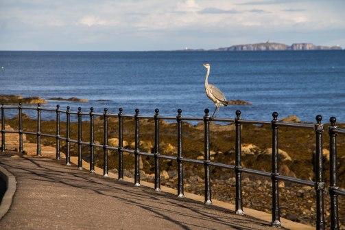 Incontri lungo il Coastal path