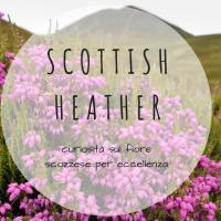 Heather - Erica, il fiore scozzese per eccellenza