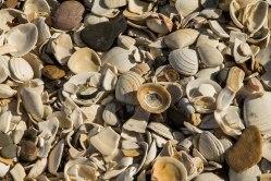 Una spiaggia fatta di conchiglie!