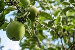 Culross Palace Orchard