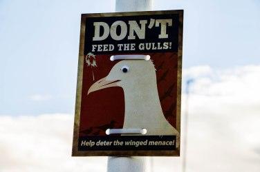 Un cartello al porto per dissuadere dal dare da mangiare ai gabbiani
