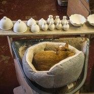 Il gatto rosso, mascotte della pottery