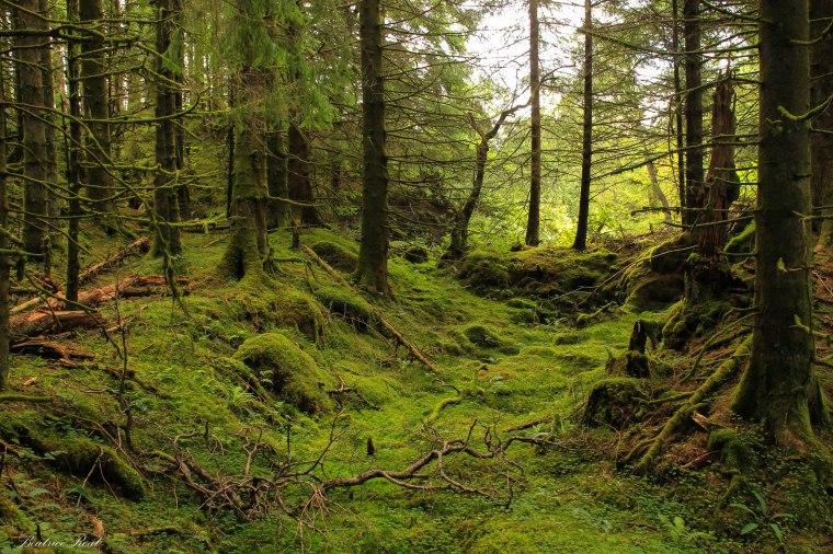 bosco scozzese