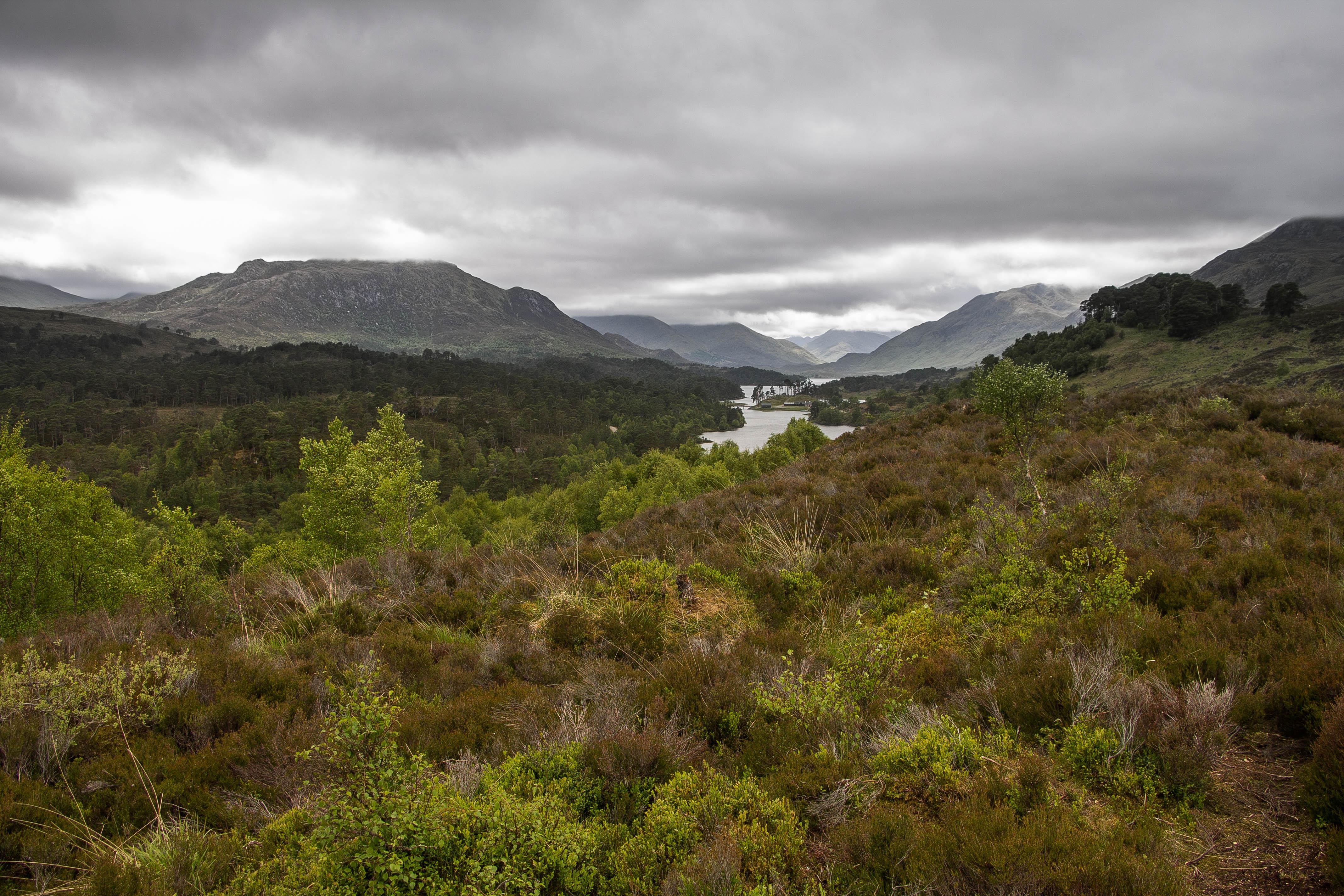 Glen Affric Scozia BeatriceRoat