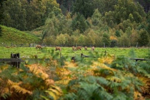 Rothiemurchus-Scotland-BeatriceRoat