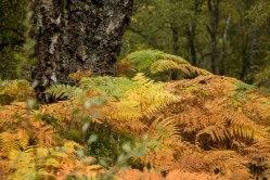 Rothiemurchus-Aviemore-Scozia-nelcuoredellascozia-BeatriceRoat