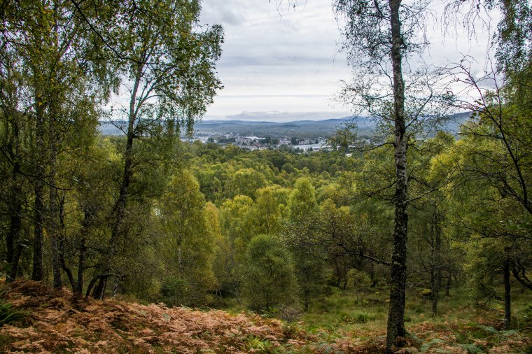 Craigiellachie Naturale Reserve-Scotland-BeatriceRoat