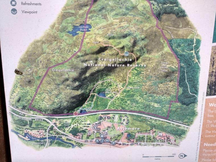 Craigiellachie Naturale Reserve - Scotland-BeatriceRoat